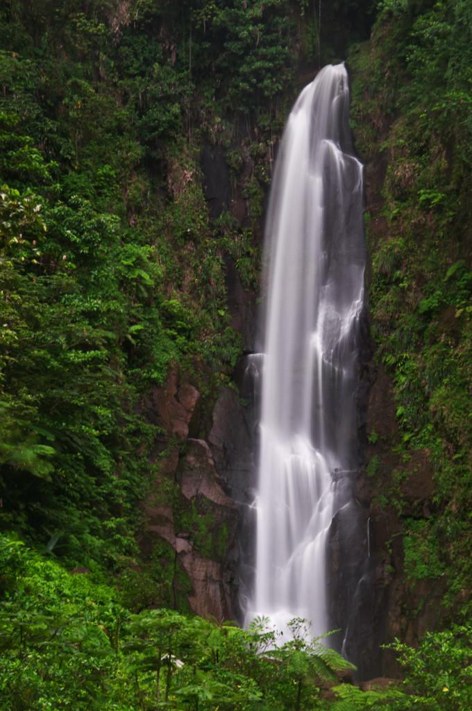 Dominica88