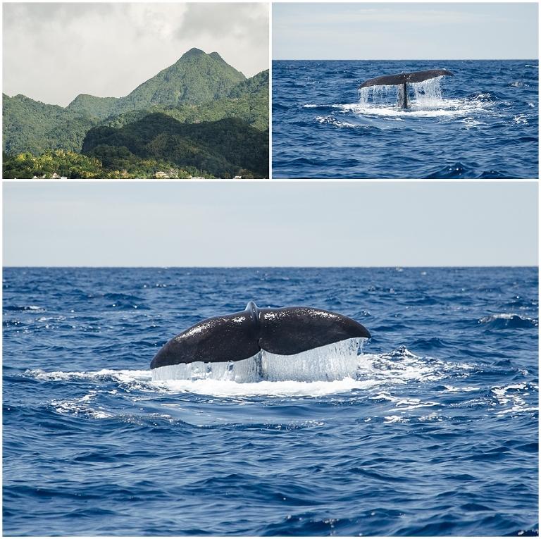 Dominica_0018