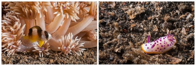 Left: Small fish Right: Nudibranch